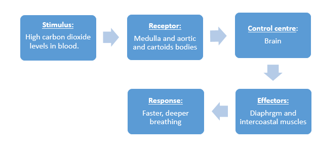 stimulus response model