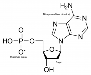 damp_chemical_structure
